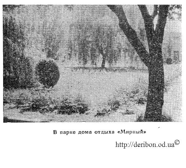 """Одесса, 8-я станция Большого Фонтана. в парке дома отдыха """"Мирный"""" фото 1940 года"""